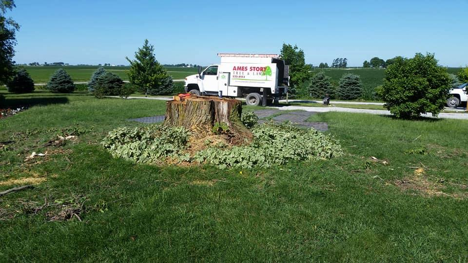 tree stump with ames story truck