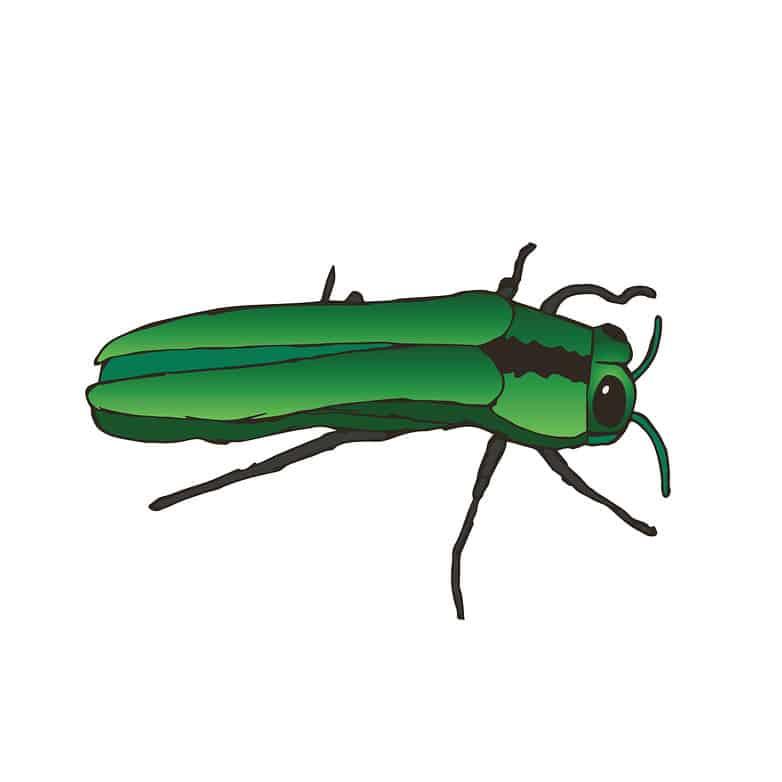 ash borer bug icon