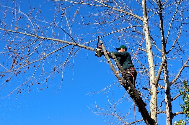 man cutting down tree branch